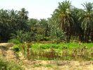 5686 - Landschap naast Hibis tempel - Kharga