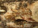 6127 - Ghaweita tempel - Kharga